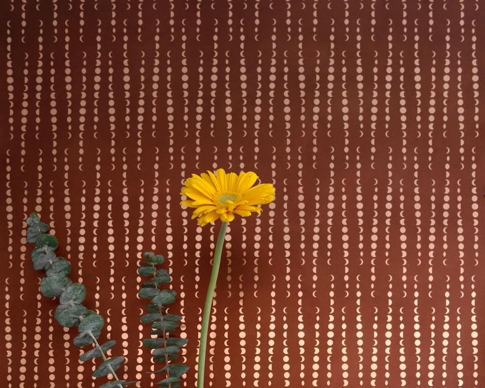 Aimée Wilder, Earthlight, Autumn; Lauren Silberman Photography