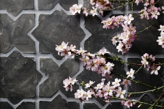 cle tile: Belgian reproduction, star cross flemish black blossom-photograph-Laurie-Frankel-2-highres (1)