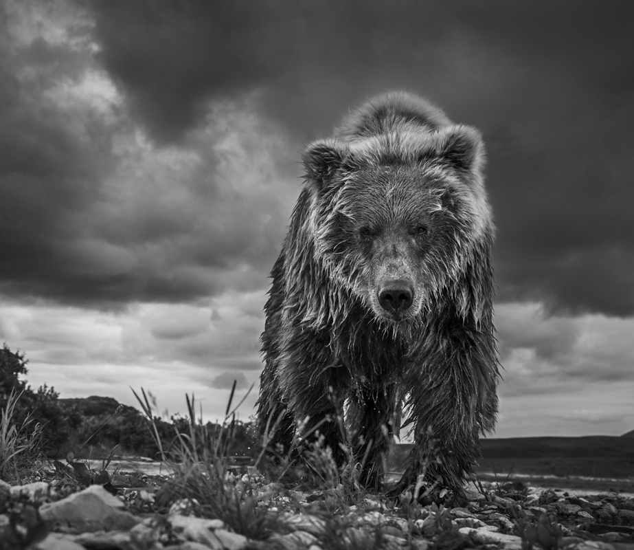 FUNNEL CREEK by David Yarrow