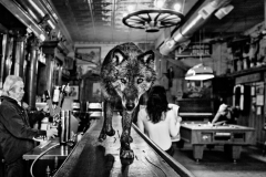 THE WOLF OF MAIN STREET by David Yarrow