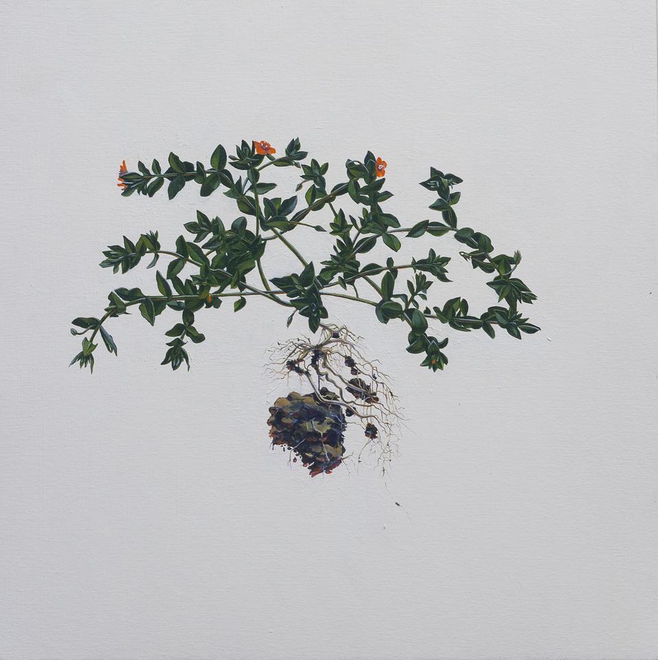 "• Andrea Bersaglieri — Pimpernel and Earth 2017 Oil on Canvas 20"" x 20"""