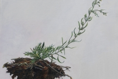"• Andrea Bersaglieri — Soil Saucer 2016 Oil on Canvas 20"" x 20"""