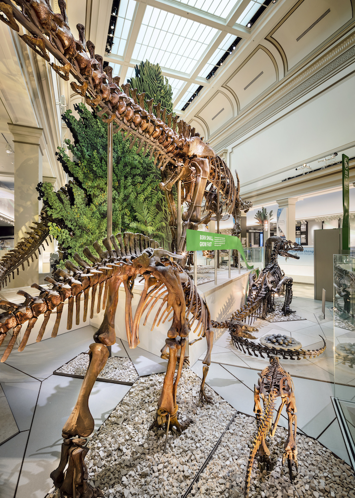 National Museum of Natural History, Deep Time, Location: Washington D.C., © Christopher Payne/Esto