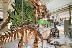 National Museum of Natural History, Deep Time, Location: Washington D.C., © Christopher Payne/Esto