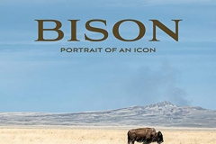 Bison-cover