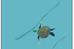 Dready, Turtle