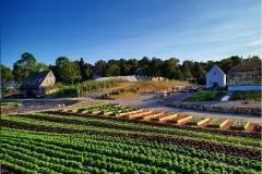 Farm to Table, Chatham Bars Inn