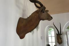 Kudu, Finca Vigia