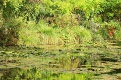 Claude Monet garden in Giverny, France