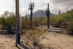 City park, Phoenix, Arizona; 2009