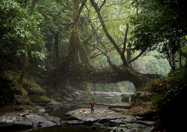 Lo-TEK: A small fisherman walks under the ancient tree root bridge at Mawlynnong village.