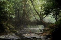 Lo-TEK: A small fisherman walks under the ancient tree root bridge at Mawlynnong village.