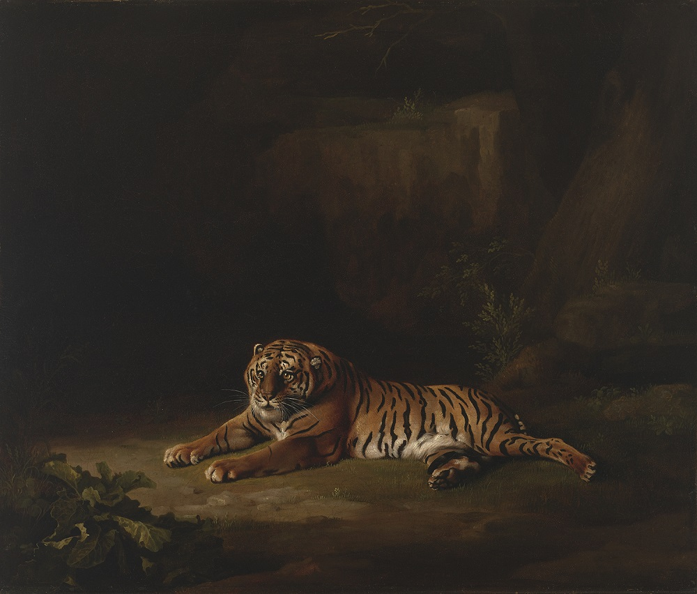 George Stubbs (British, 1724–1806). Tiger, ca. 1769–71. Oil on canvas, 24 1/4 x 28 3/4 in. Virginia Museum of Fine Arts, Richmond, Paul Mellon Collection, 99.95. Image © Virginia Museum of Fine Arts. Photo: Katherine Wetzel