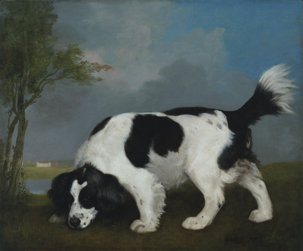 004_Stubbs_Black-and-White-Spaniel_VMFA
