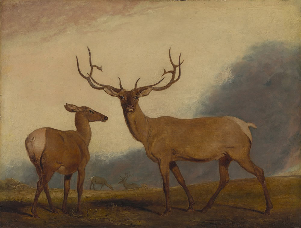 Abraham Cooper, R. A. (English, 1787–1868). The Wapati or North American Deer, 1818. Oil on panel, 10 7/8 x 14 1/8 in. Virginia Museum of Fine Arts, Richmond, Paul Mellon Collection, 85.487. Image © Virginia Museum of Fine Arts. Photo: Travis Fullerton