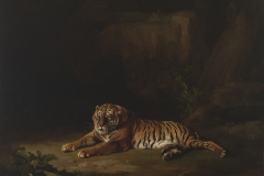 George Stubbs (British, 1724–1806). Tiger, ca. 1769–71. Oil on canvas, 24 1/4 x 28 3/4 in. Virginia Museum of Fine Arts, Richmond, Paul Mellon Collection, 99.95. Image © Virginia Museum of Fine Arts. Photo: Katherine Wetzel