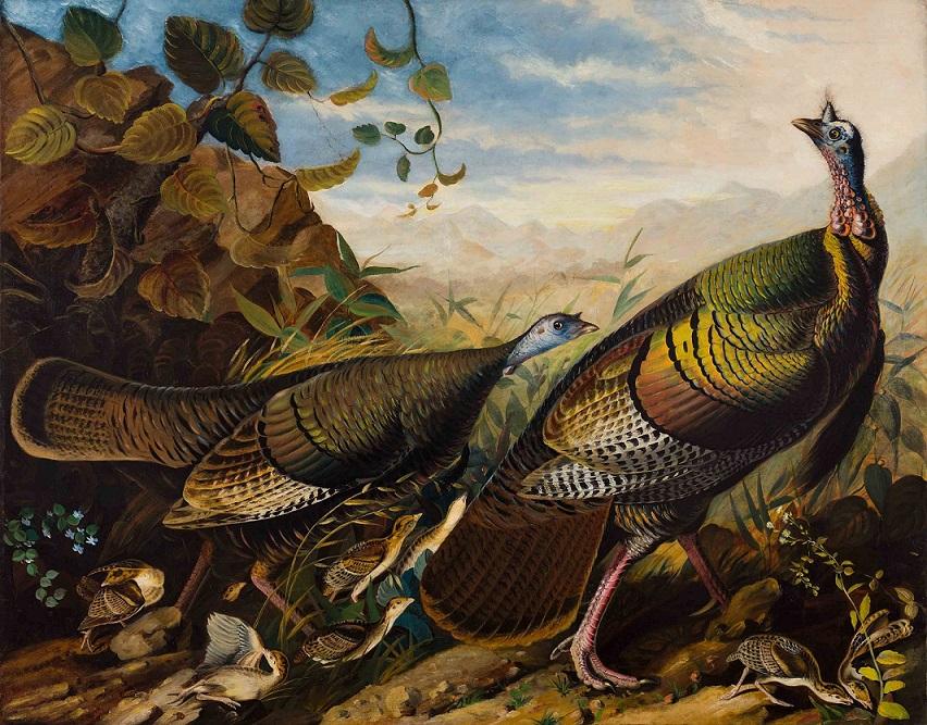Audubon, John James, Wild Turkey Cock,1826