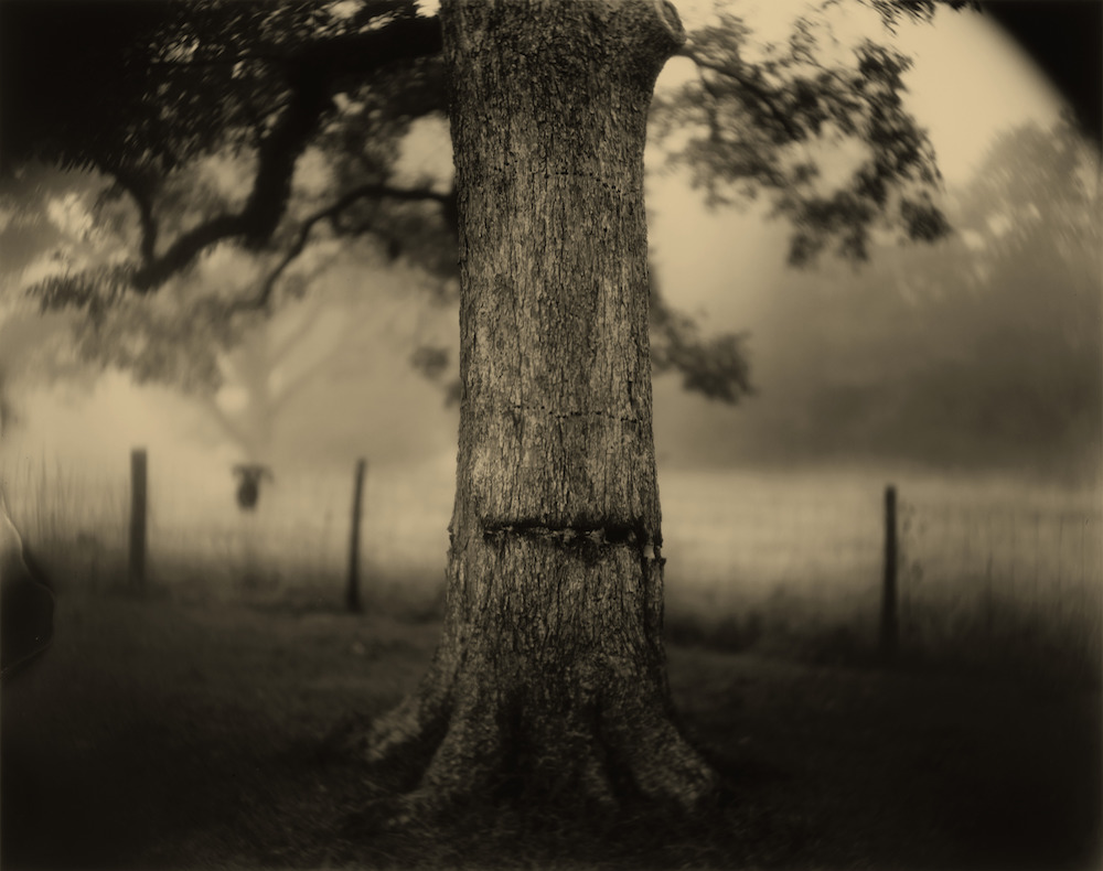 Sally Mann (American, born 1951), Deep South, Untitled (Scarred Tree), 1998, gelatin silver print, National Gallery of Art, Washington, Alfred H. Moses and Fern M. Schad Fund