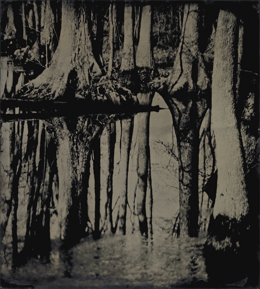 Sally Mann (American, born 1951) Blackwater 25, 2008-2012 tintype Collection of the Artist