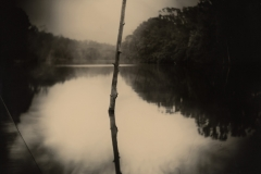 Sally Mann, (American, born 1951) Deep South, Untitled (Stick), 1998 gelatin silver print, printed 1999 New Orleans Museum of Art, Collection of H. Russell Albright, M.D.