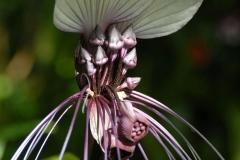 Courtesy Marie Selby Botanical Gardens