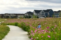 Nestled amongst the field of Cosmos, Stapleton Residents enjoy the expansive prairie landscape of Cottonwood Gallery