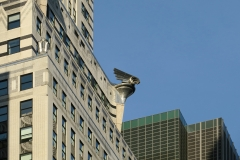 Chrysler-Building-photo-by-Paul-Clemence-8