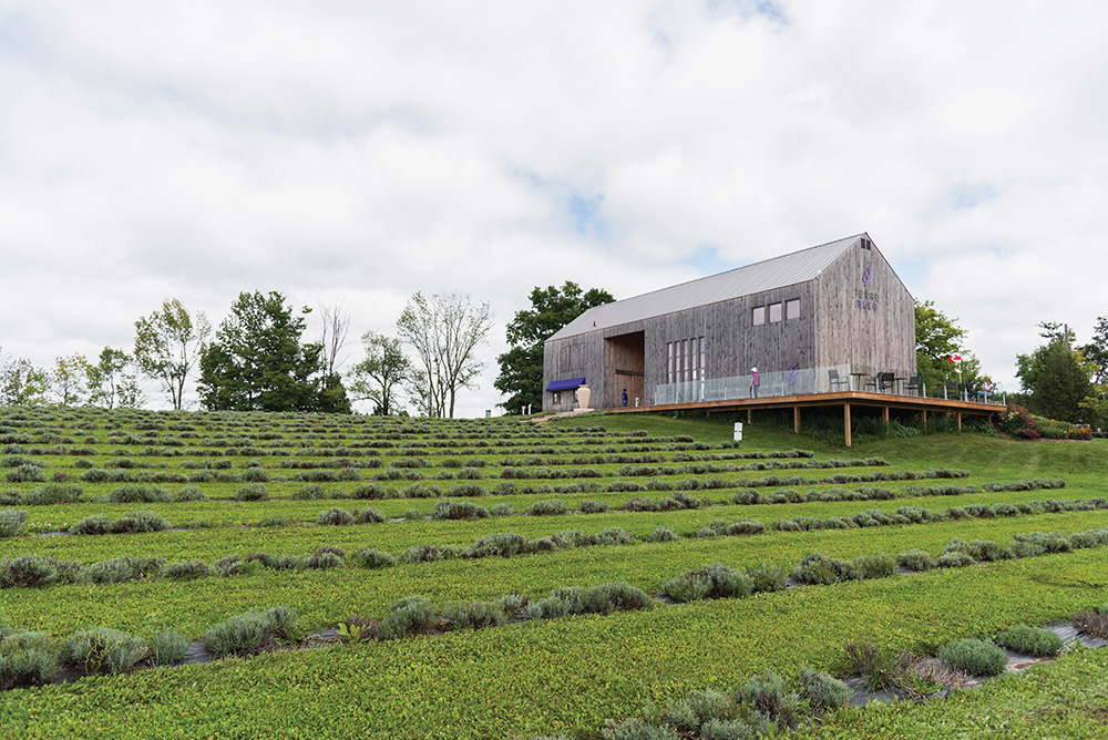 Photo courtesy of Terre Bleu Lavender Farm
