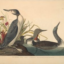 John James Audubon at Raleigh's NCMA