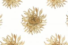 anthemum_amadeus