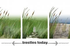 SafeTrestles_Wetlands