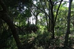 maritimeforest712