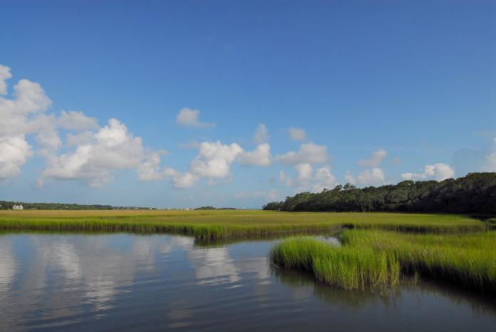 marsh-blue-sky