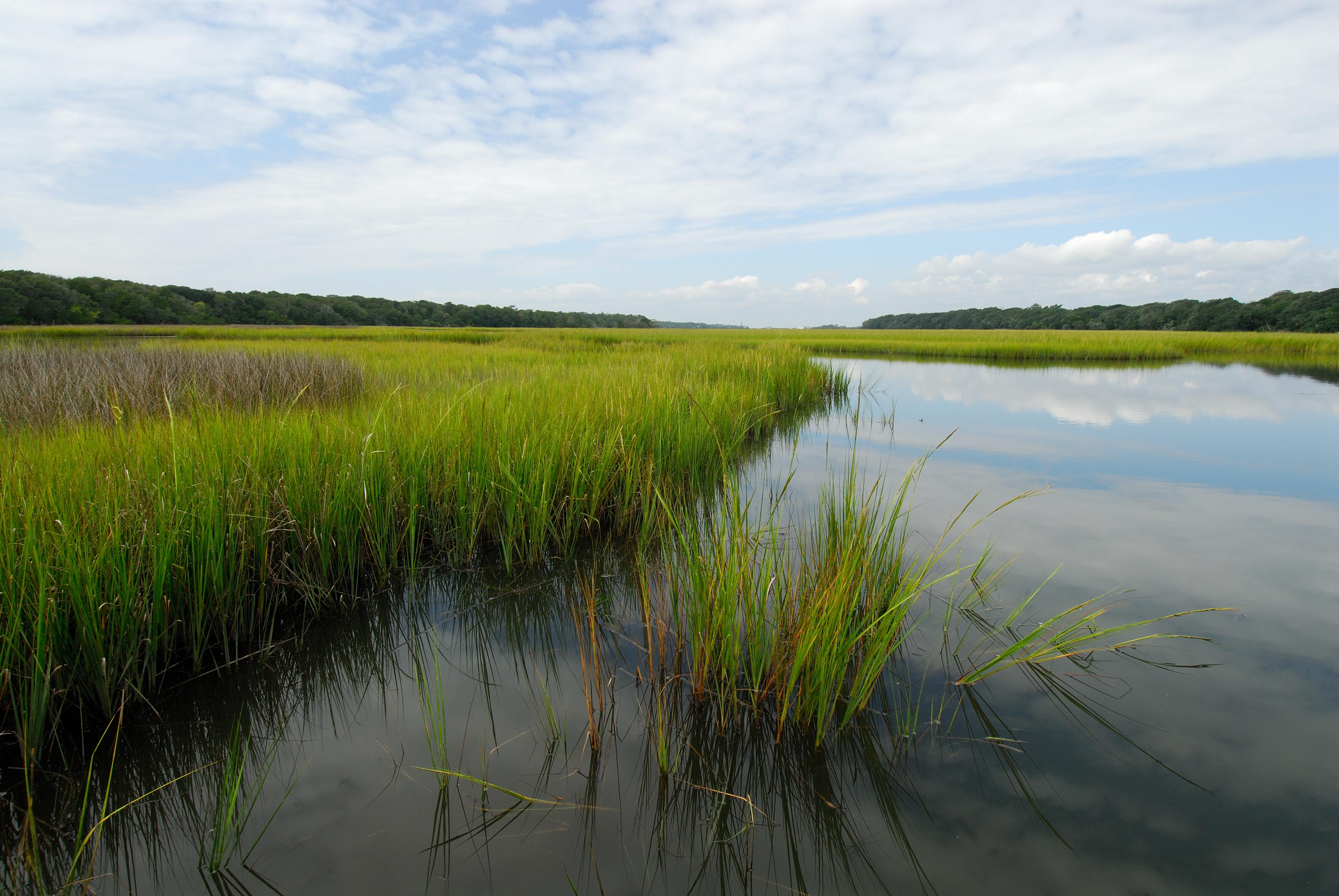 marsh-green