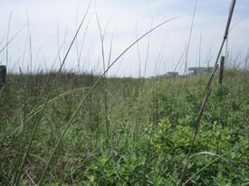w_dunes3