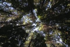 vault-of-pines-0364-1024x682