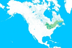 northamerica_gl-01_small