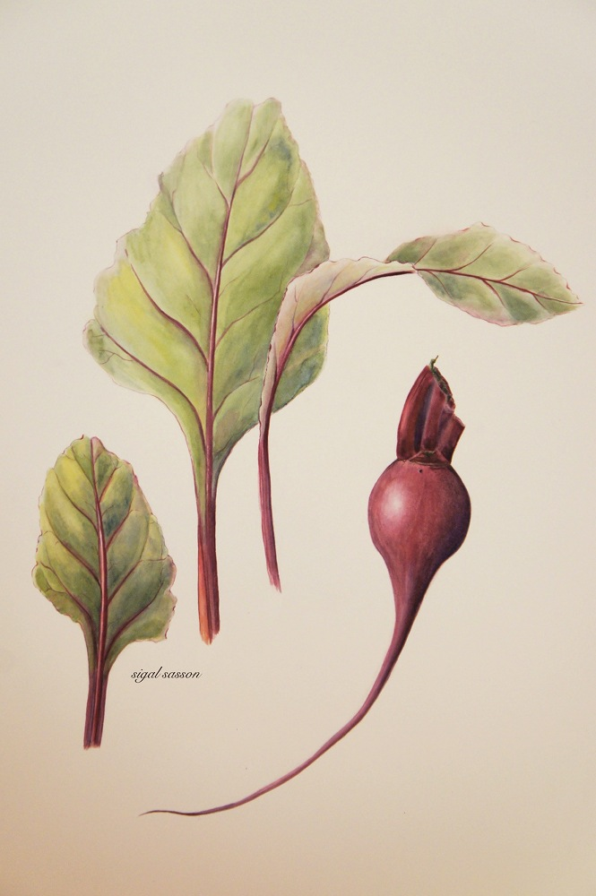 Beet Root Watercolor