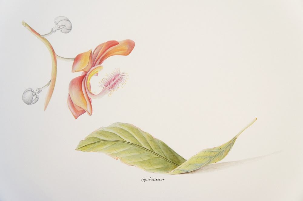 Cannonball Watercolor