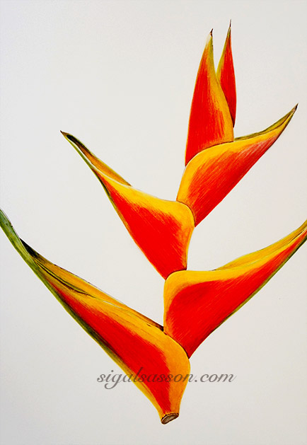 Heliconia Water Color