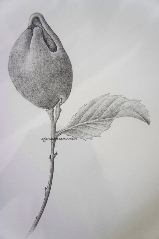 Lemon Graphite